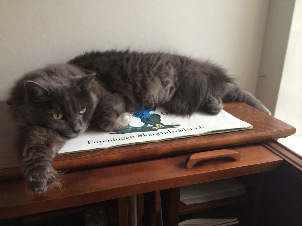 katten-theodor